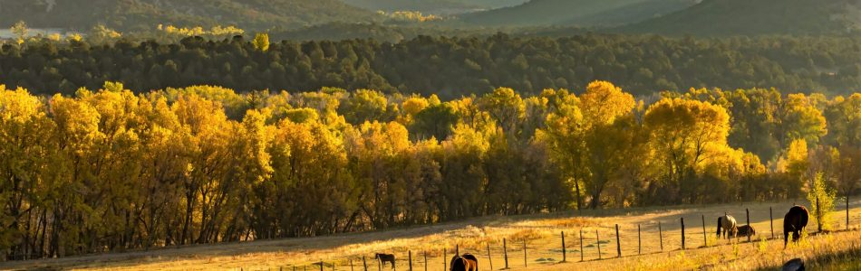 John-Jarvie-Historic-Ranch-Ledgestone-Vernal